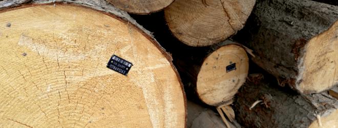 marked-wood-1024x396-1-min